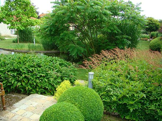 mise-en-scene-arbre-jardin-et-piscine